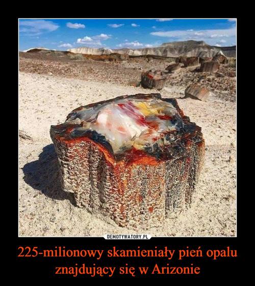 225-milionowy skamieniały pień opalu znajdujący się w Arizonie