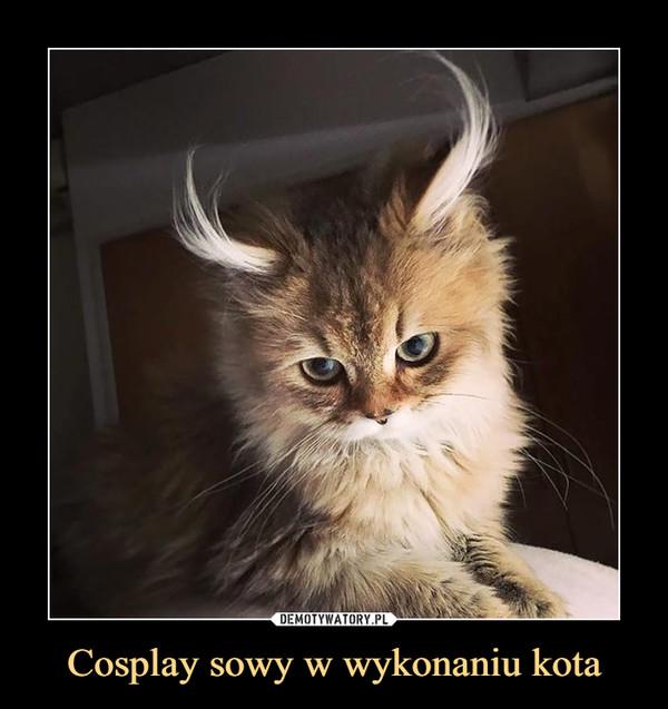 Cosplay sowy w wykonaniu kota –