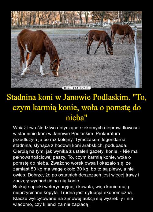 """Stadnina koni w Janowie Podlaskim. """"To, czym karmią konie, woła o pomstę do nieba"""""""