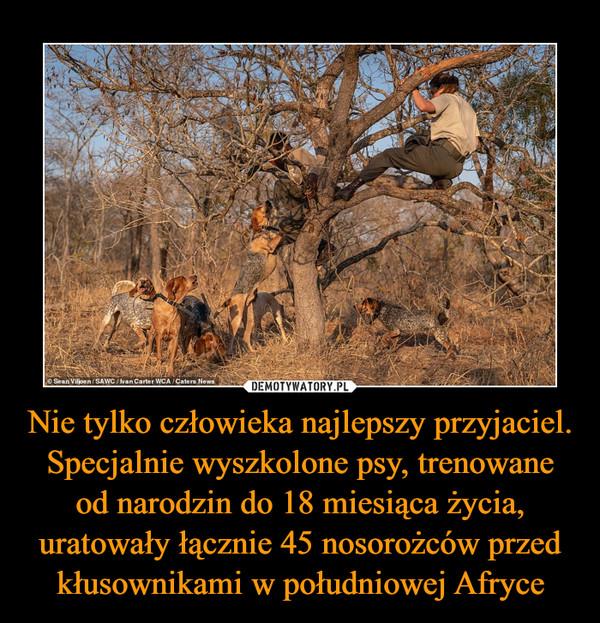 Nie tylko człowieka najlepszy przyjaciel. Specjalnie wyszkolone psy, trenowane od narodzin do 18 miesiąca życia, uratowały łącznie 45 nosorożców przed kłusownikami w południowej Afryce