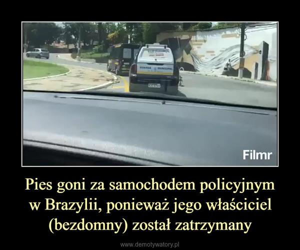Pies goni za samochodem policyjnymw Brazylii, ponieważ jego właściciel (bezdomny) został zatrzymany –