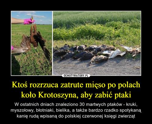 Ktoś rozrzuca zatrute mięso po polach koło Krotoszyna, aby zabić ptaki