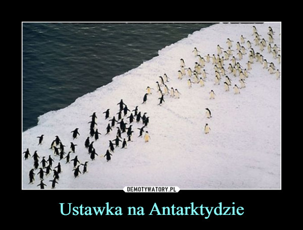 Ustawka na Antarktydzie –