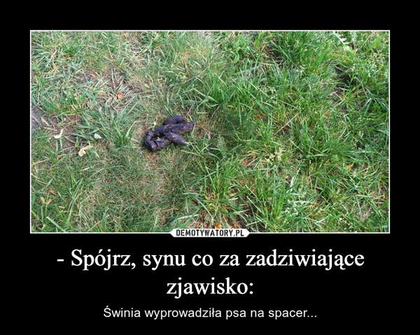 - Spójrz, synu co za zadziwiające zjawisko: – Świnia wyprowadziła psa na spacer...
