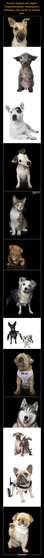 """Pewien fotograf robi zdjęcia """"nieperfekcyjnym"""" zwierzętom z defektami, aby pomóc im znaleźć dom"""