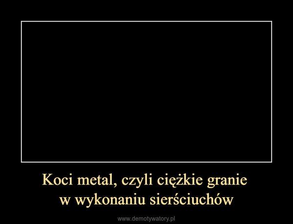 Koci metal, czyli ciężkie granie w wykonaniu sierściuchów –