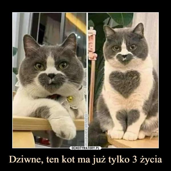 Dziwne, ten kot ma już tylko 3 życia –