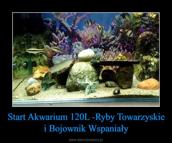 Start Akwarium 120L -Ryby Towarzyskie i Bojownik Wspaniały –