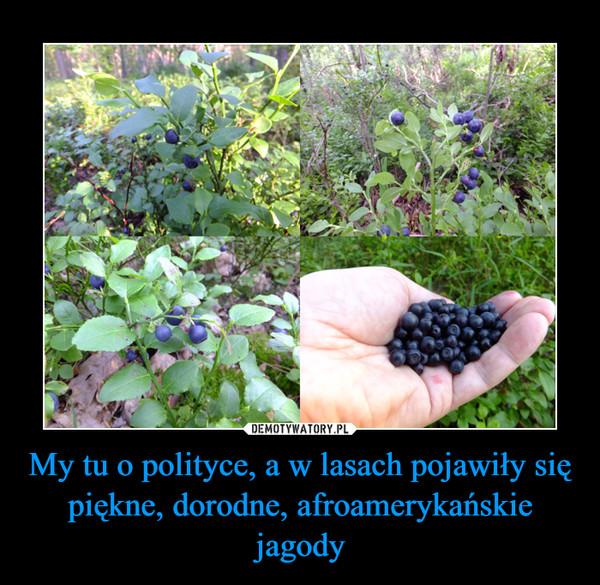 My tu o polityce, a w lasach pojawiły się piękne, dorodne, afroamerykańskie jagody –