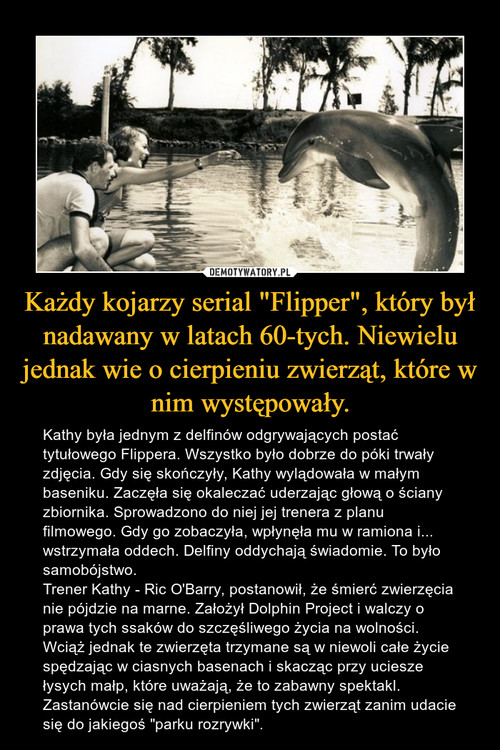 """Każdy kojarzy serial """"Flipper"""", który był nadawany w latach 60-tych. Niewielu jednak wie o cierpieniu zwierząt, które w nim występowały."""