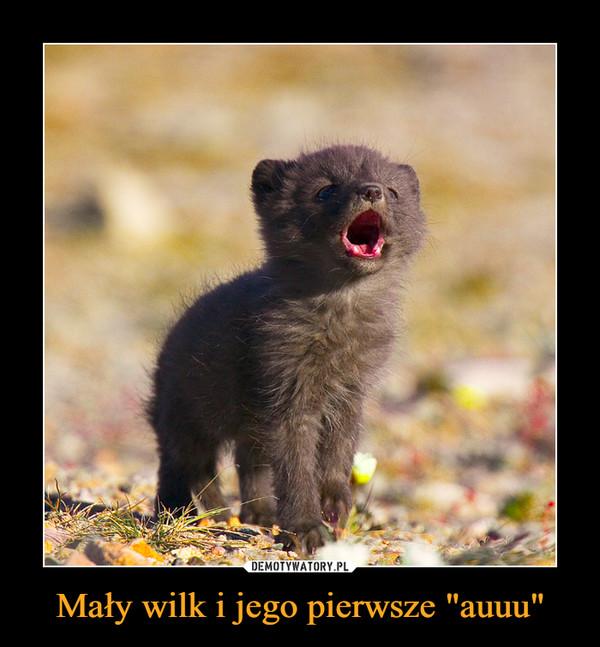 """Mały wilk i jego pierwsze """"auuu"""" –"""