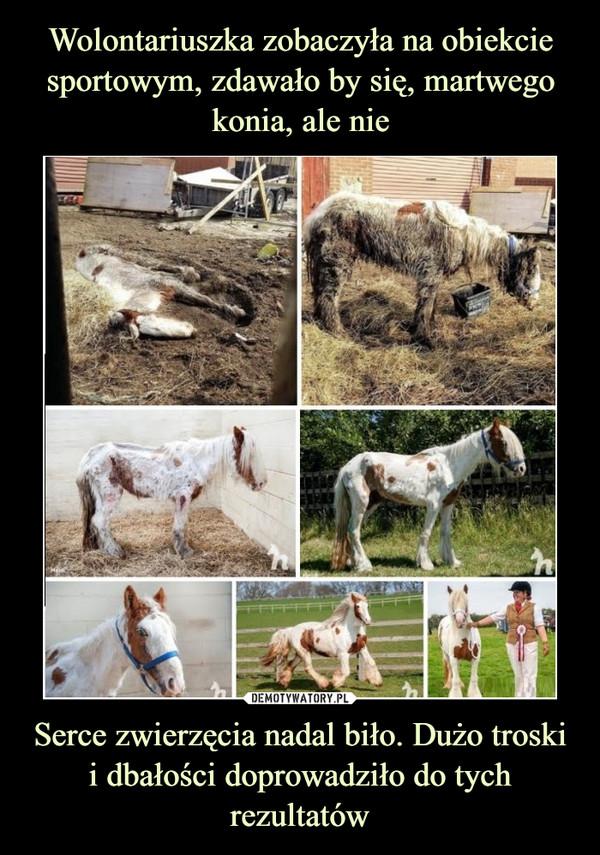 Serce zwierzęcia nadal biło. Dużo troski i dbałości doprowadziło do tych rezultatów –