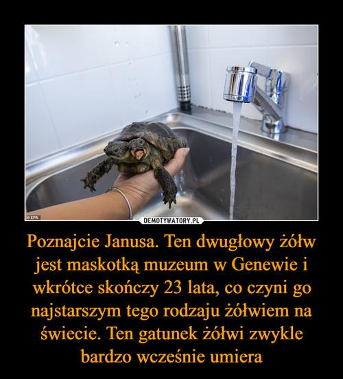 Poznajcie Janusa. Ten dwugłowy żółw jest maskotką muzeum w Genewie i wkrótce skończy 23 lata, co czyni go najstarszym tego rodzaju żółwiem na świecie. Ten gatunek żółwi zwykle bardzo wcześnie umiera