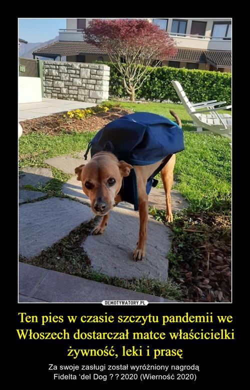 Ten pies w czasie szczytu pandemii we Włoszech dostarczał matce właścicielki żywność, leki i prasę