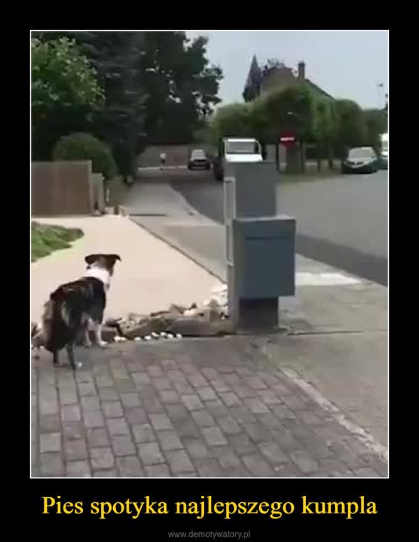 Pies spotyka najlepszego kumpla –