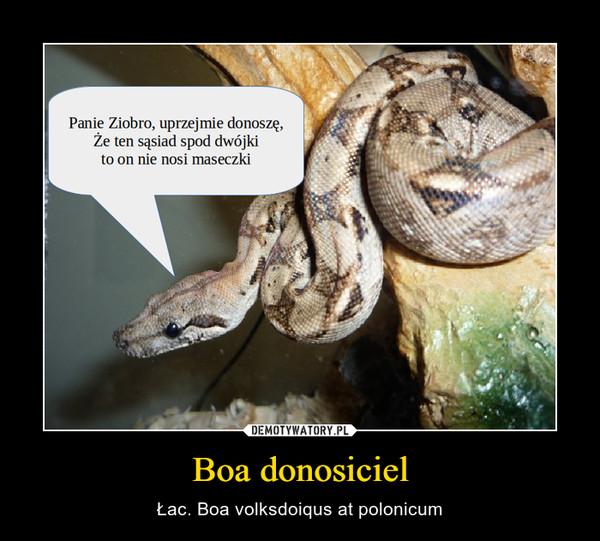 Boa donosiciel – Łac. Boa volksdoiqus at polonicum