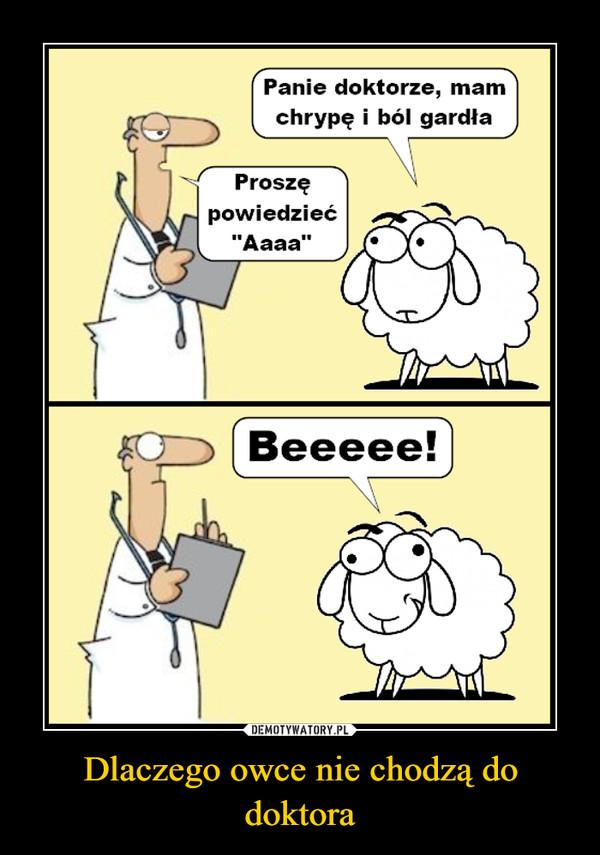 """Dlaczego owce nie chodzą do doktora –  Panie doktorze, mamom chrypę i ból gardła Proszę powiedzieć """"Aaaa"""" Beeeee!"""