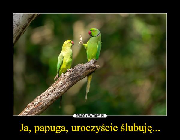 Ja, papuga, uroczyście ślubuję... –