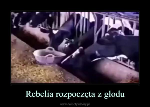 Rebelia rozpoczęta z głodu –