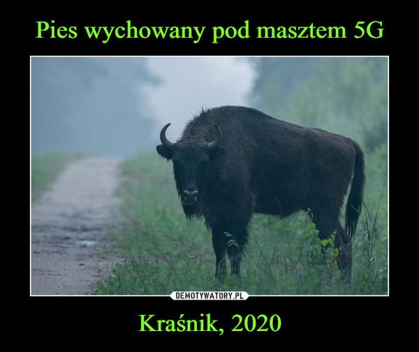 Kraśnik, 2020 –