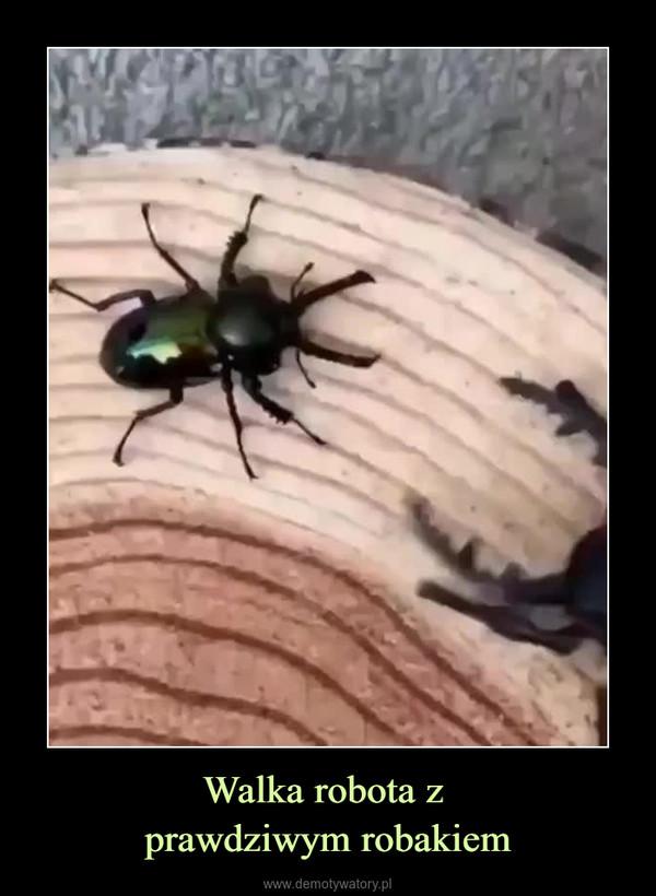 Walka robota z prawdziwym robakiem –