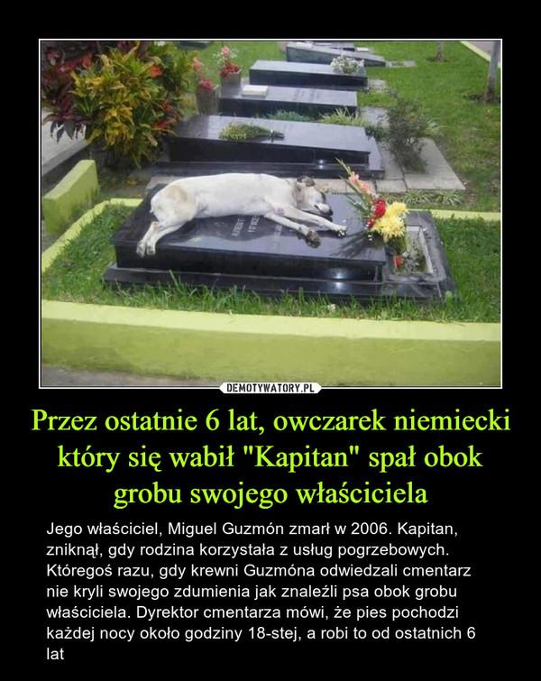 """Przez ostatnie 6 lat, owczarek niemiecki który się wabił """"Kapitan"""" spał obok grobu swojego właściciela – Jego właściciel, Miguel Guzmón zmarł w 2006. Kapitan, zniknął, gdy rodzina korzystała z usług pogrzebowych. Któregoś razu, gdy krewni Guzmóna odwiedzali cmentarz nie kryli swojego zdumienia jak znaleźli psa obok grobu właściciela. Dyrektor cmentarza mówi, że pies pochodzi każdej nocy około godziny 18-stej, a robi to od ostatnich 6 lat"""