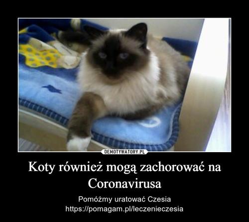 Koty również mogą zachorować na Coronavirusa