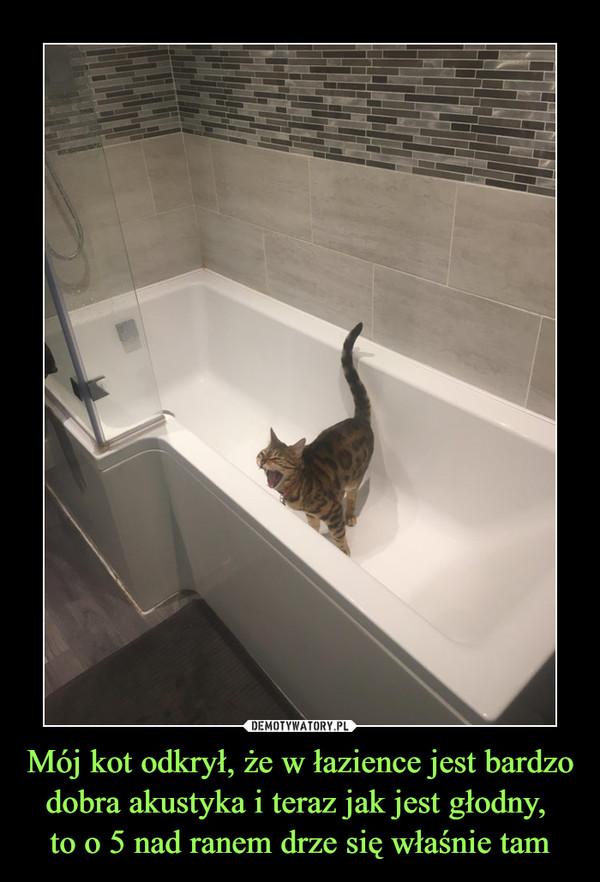 Mój kot odkrył, że w łazience jest bardzo dobra akustyka i teraz jak jest głodny, to o 5 nad ranem drze się właśnie tam –