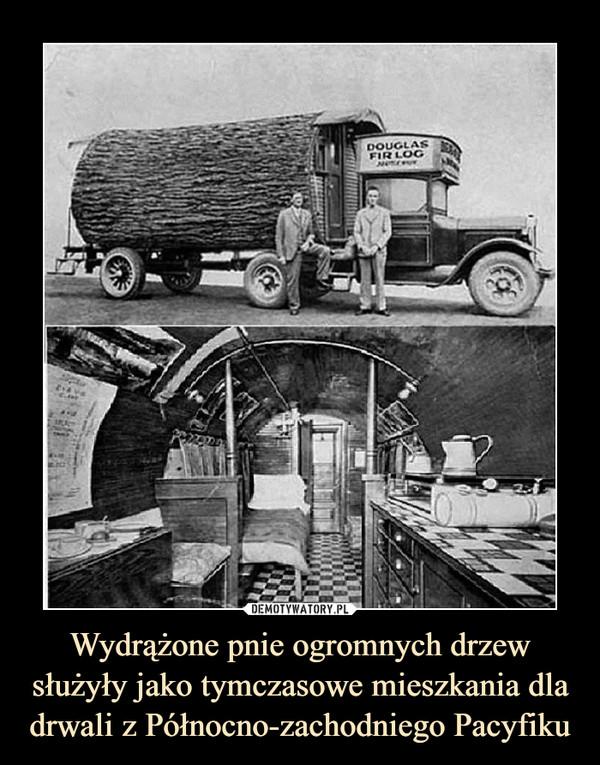 Wydrążone pnie ogromnych drzew służyły jako tymczasowe mieszkania dla drwali z Północno-zachodniego Pacyfiku –