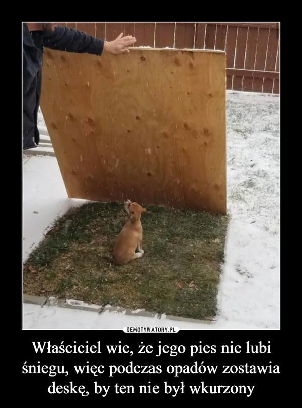 Właściciel wie, że jego pies nie lubi śniegu, więc podczas opadów zostawia deskę, by ten nie był wkurzony –