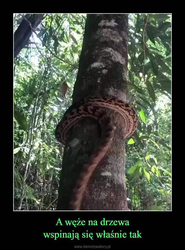 A węże na drzewawspinają się właśnie tak –