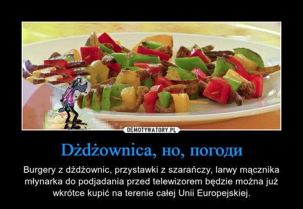 Dżdżownica, но, погоди – Burgery z dżdżownic, przystawki z szarańczy, larwy mącznika młynarka do podjadania przed telewizorem będzie można już wkrótce kupić na terenie całej Unii Europejskiej.