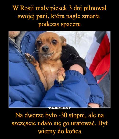 W Rosji mały piesek 3 dni pilnował swojej pani, która nagle zmarła  podczas spaceru Na dworze było -30 stopni, ale na szczęście udało się go uratować. Był wierny do końca