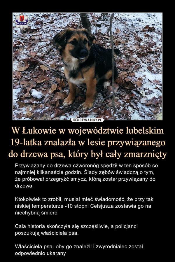 W Łukowie w województwie lubelskim 19-latka znalazła w lesie przywiązanego do drzewa psa, który był cały zmarznięty – Przywiązany do drzewa czworonóg spędził w ten sposób co najmniej kilkanaście godzin. Ślady zębów świadczą o tym, że próbował przegryźć smycz, którą został przywiązany do drzewa.Ktokolwiek to zrobił, musiał mieć świadomość, że przy tak niskiej temperaturze -10 stopni Celsjusza zostawia go na niechybną śmierć.Cała historia skończyła się szczęśliwie, a policjanci poszukują właściciela psa.Właściciela psa- oby go znaleźli i zwyrodnialec został odpowiednio ukarany