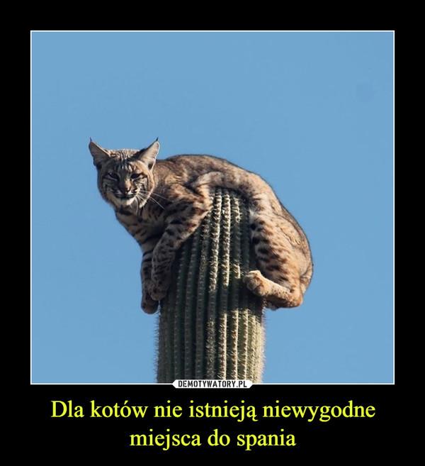 Dla kotów nie istnieją niewygodne miejsca do spania –