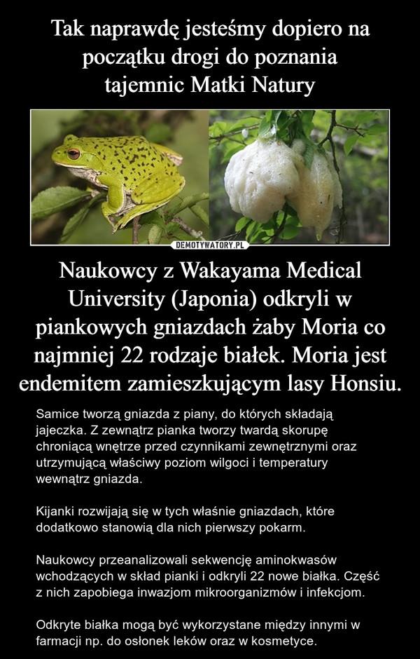 Naukowcy z Wakayama Medical University (Japonia) odkryli w piankowych gniazdach żaby Moria co najmniej 22 rodzaje białek. Moria jest endemitem zamieszkującym lasy Honsiu. – Samice tworzą gniazda z piany, do których składają jajeczka. Z zewnątrz pianka tworzy twardą skorupę chroniącą wnętrze przed czynnikami zewnętrznymi oraz utrzymującą właściwy poziom wilgoci i temperatury wewnątrz gniazda. Kijanki rozwijają się w tych właśnie gniazdach, które dodatkowo stanowią dla nich pierwszy pokarm.Naukowcy przeanalizowali sekwencję aminokwasów wchodzących w skład pianki i odkryli 22 nowe białka. Część z nich zapobiega inwazjom mikroorganizmów i infekcjom.Odkryte białka mogą być wykorzystane między innymi w farmacji np. do osłonek leków oraz w kosmetyce.