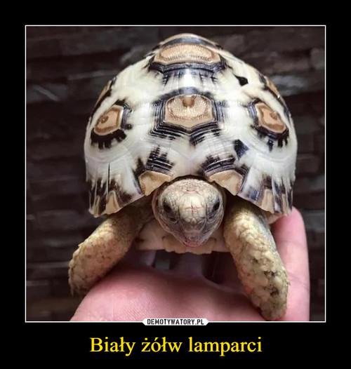 Biały żółw lamparci