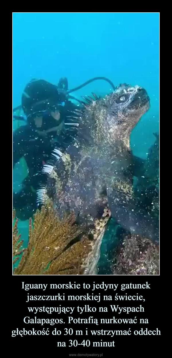 Iguany morskie to jedyny gatunek jaszczurki morskiej na świecie, występujący tylko na Wyspach Galapagos. Potrafią nurkować na głębokość do 30 m i wstrzymać oddech na 30-40 minut –