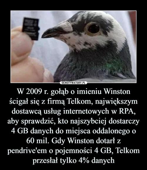 W 2009 r. gołąb o imieniu Winston ścigał się z firmą Telkom, największym dostawcą usług internetowych w RPA, aby sprawdzić, kto najszybciej dostarczy 4 GB danych do miejsca oddalonego o 60 mil. Gdy Winston dotarł z pendrive'em o pojemności 4 GB, Telkom przesłał tylko 4% danych