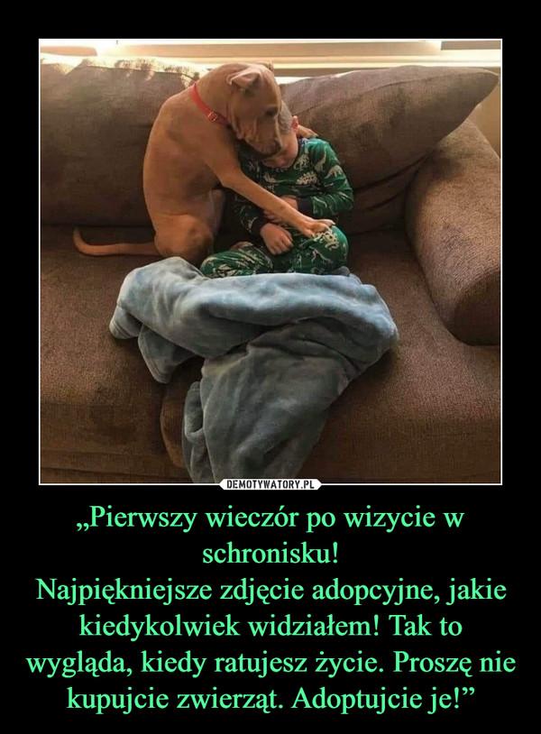 """""""Pierwszy wieczór po wizycie w schronisku!Najpiękniejsze zdjęcie adopcyjne, jakie kiedykolwiek widziałem! Tak to wygląda, kiedy ratujesz życie. Proszę nie kupujcie zwierząt. Adoptujcie je!"""" –"""