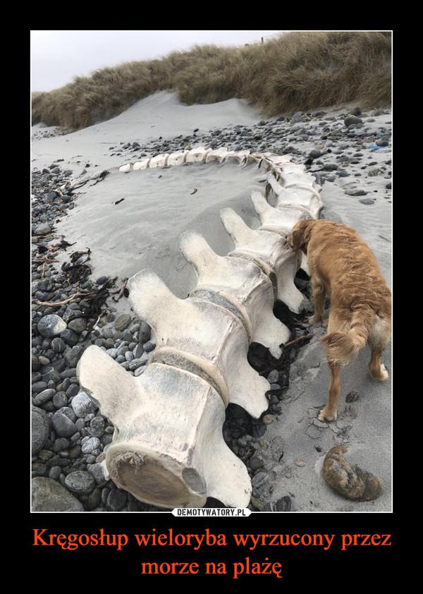 Kręgosłup wieloryba wyrzucony przez morze na plażę –