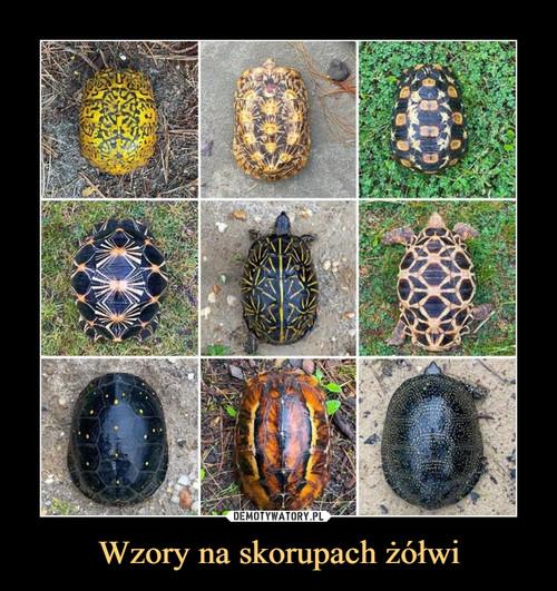Wzory na skorupach żółwi