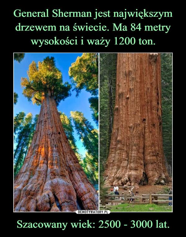 Szacowany wiek: 2500 - 3000 lat. –