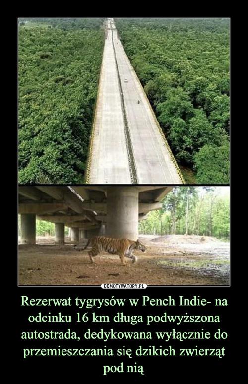 Rezerwat tygrysów w Pench Indie- na odcinku 16 km długa podwyższona autostrada, dedykowana wyłącznie do przemieszczania się dzikich zwierząt pod nią
