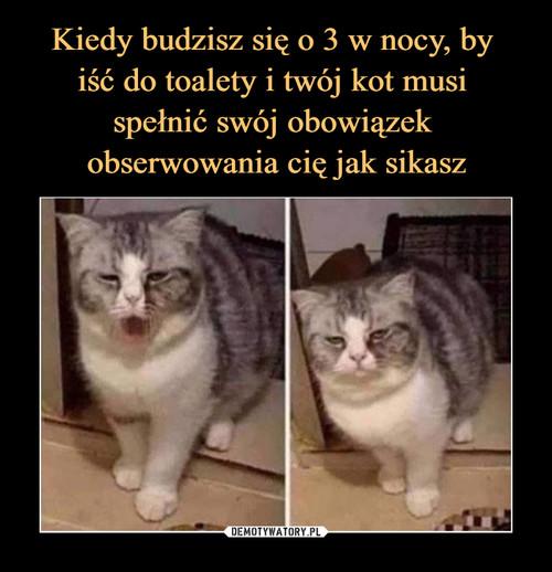 Kiedy budzisz się o 3 w nocy, by  iść do toalety i twój kot musi  spełnić swój obowiązek  obserwowania cię jak sikasz