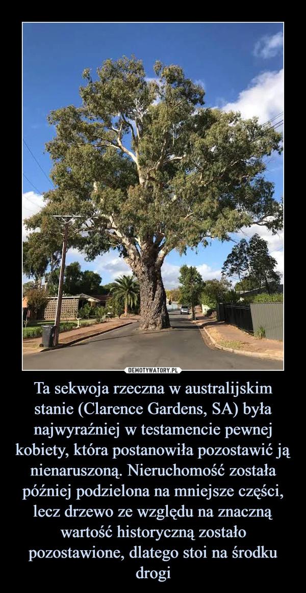 Ta sekwoja rzeczna w australijskim stanie (Clarence Gardens, SA) była najwyraźniej w testamencie pewnej kobiety, która postanowiła pozostawić ją nienaruszoną. Nieruchomość została później podzielona na mniejsze części, lecz drzewo ze względu na znaczną wartość historyczną zostało pozostawione, dlatego stoi na środku drogi –