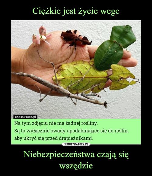 Ciężkie jest życie wege Niebezpieczeństwa czają się wszędzie
