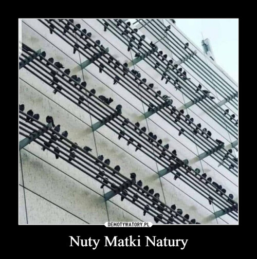 Nuty Matki Natury