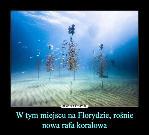 W tym miejscu na Florydzie, rośnie nowa rafa koralowa
