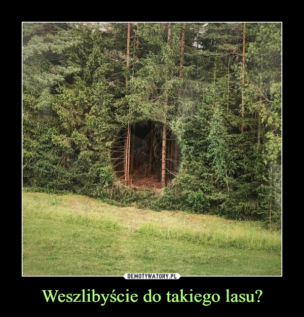 Weszlibyście do takiego lasu? –